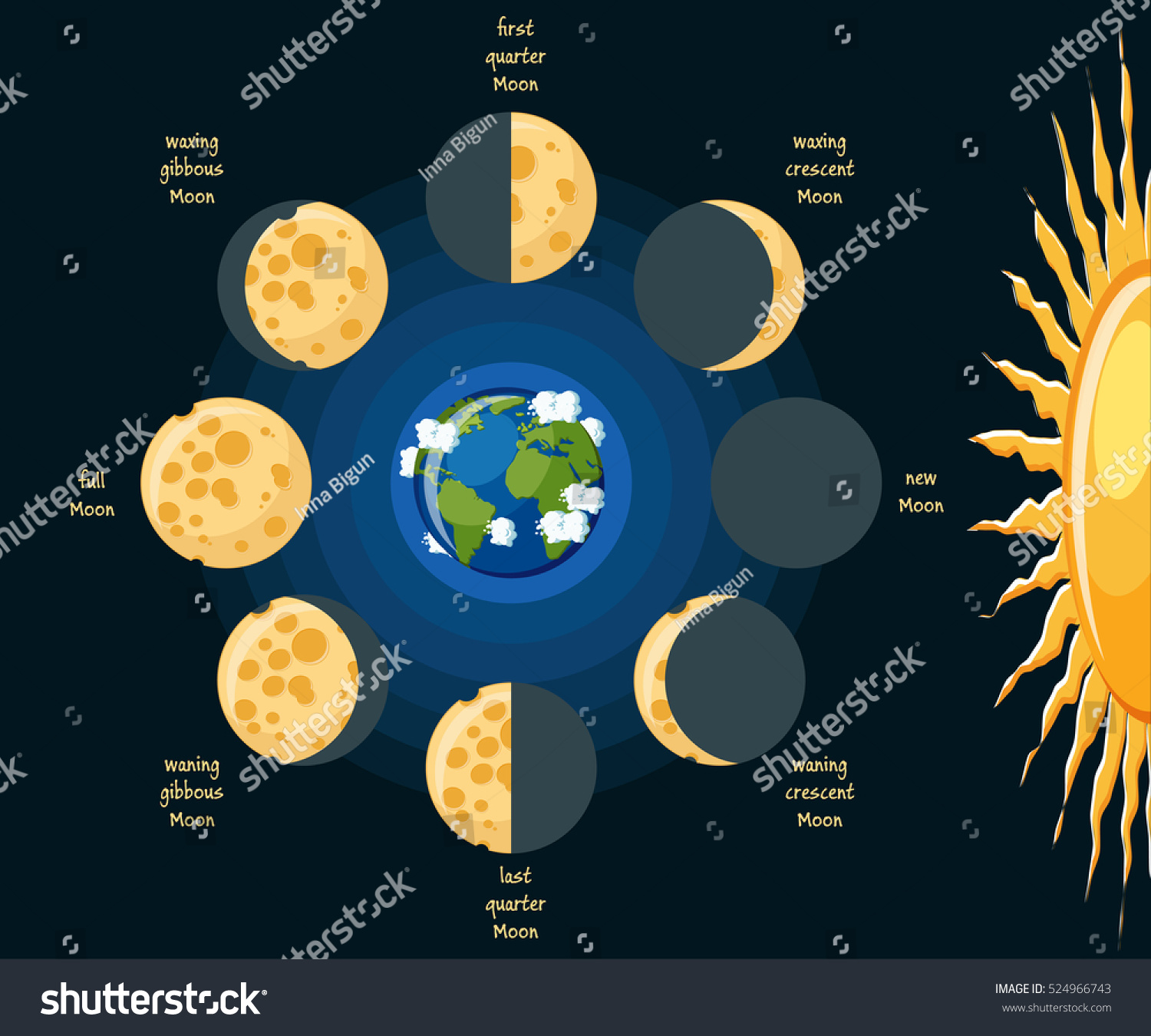 Basic Moon Phases Diagram Cheese Moon Stock Vector