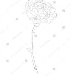 beautiful monochrome black and white carnation flower isolated on white background hand drawn contour [ 1269 x 1600 Pixel ]