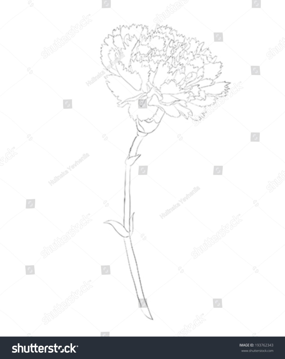 medium resolution of beautiful monochrome black and white carnation flower isolated on white background hand drawn contour