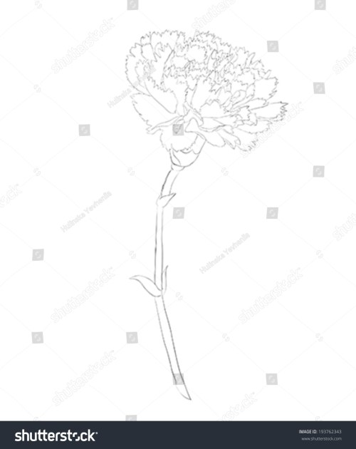 small resolution of beautiful monochrome black and white carnation flower isolated on white background hand drawn contour