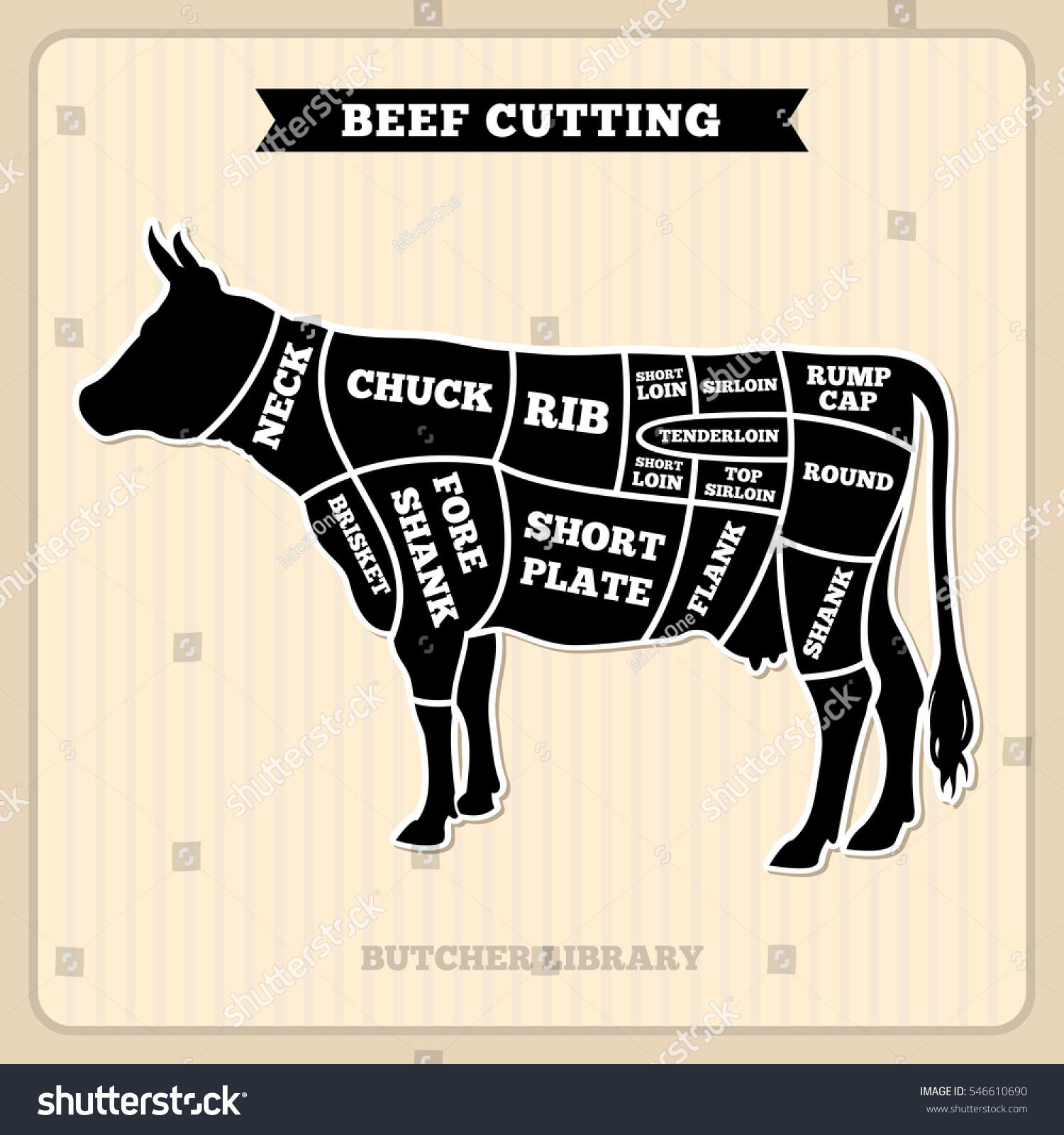 beef cuts diagram of cow ez go gas wiring butcher vector stock