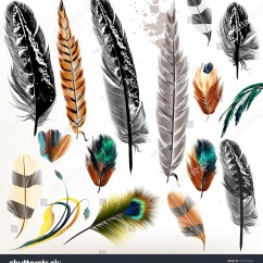 Diagram Types Of Feathers Head And Neck Muscles Blank Different Bird Pictures To Pin On