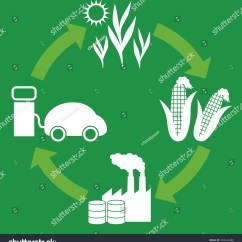 Corn Plant Life Cycle Diagram Cat5 Plug Wiring Biofuel Biomass Ethanol Stock Vector