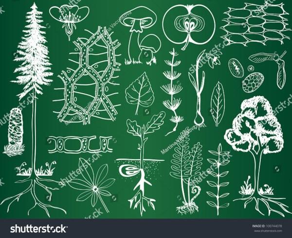 Biology Plant Sketches School Board Stock Vector