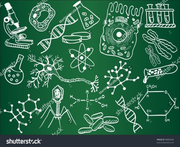 Biology Sketches School Board Vector Stock
