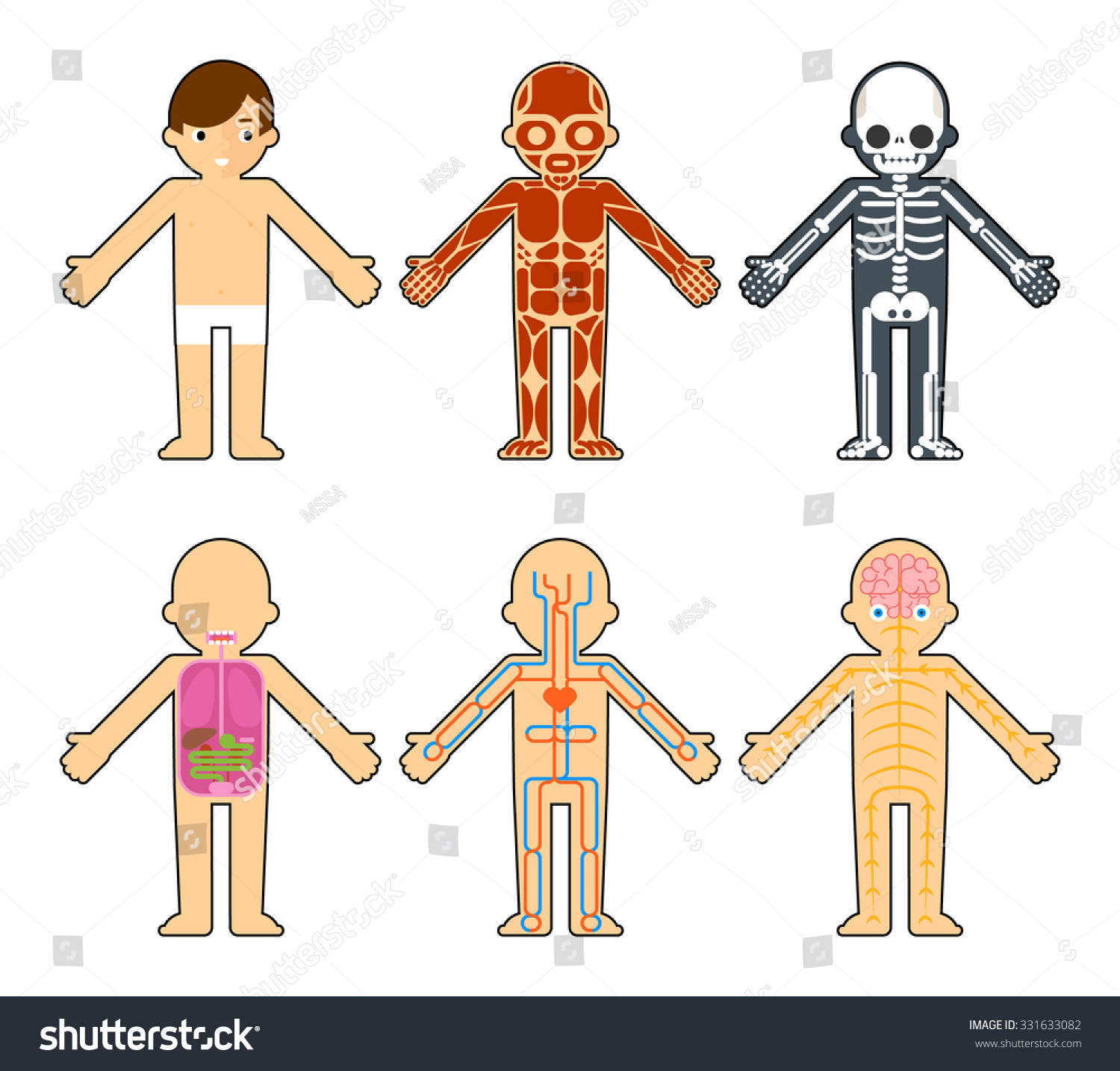 Body Anatomy Kids Skeleton Muscles Nervous Stock Vector