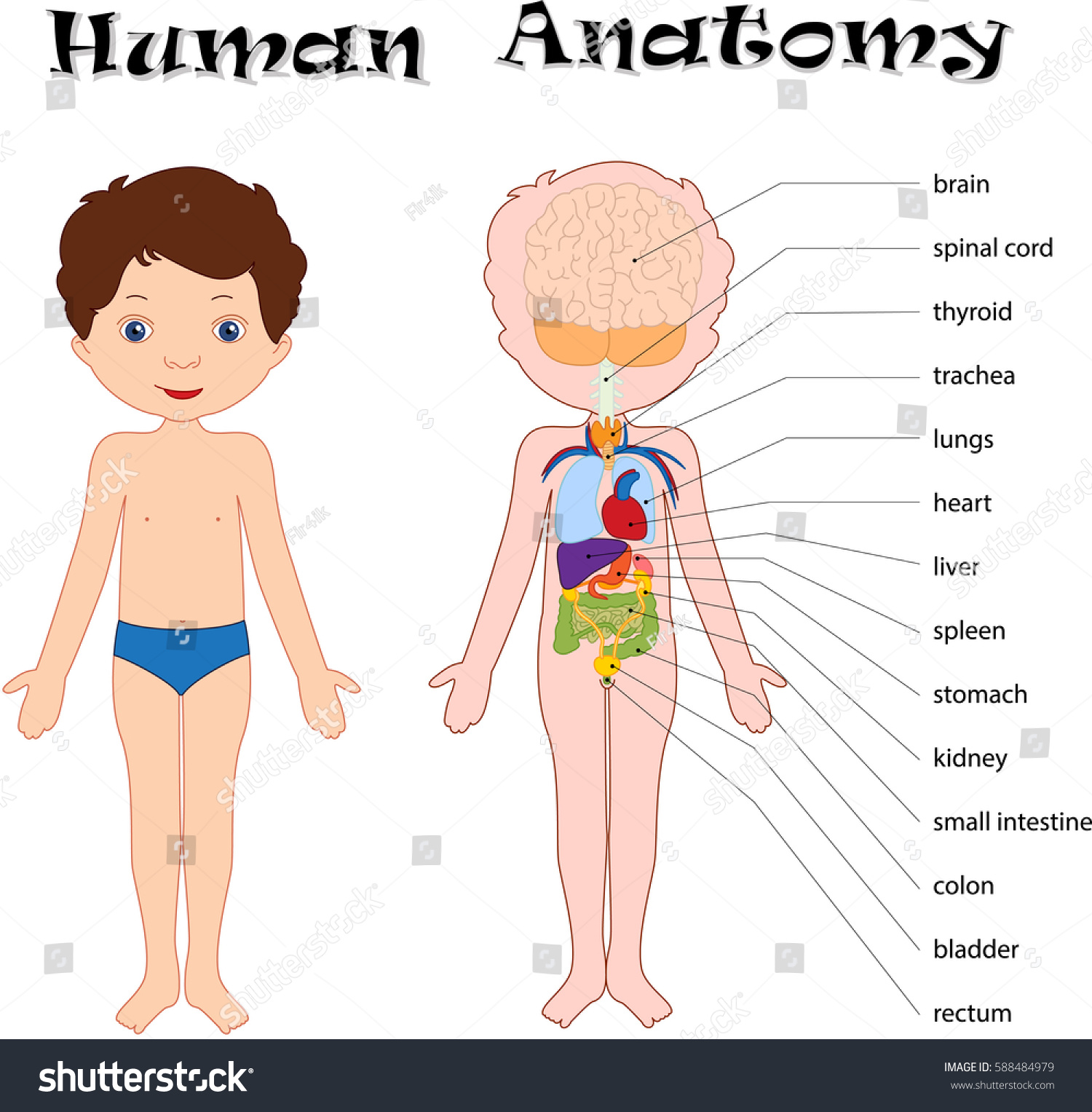 Boy Unclothed Isolated On White Human Stock Vector