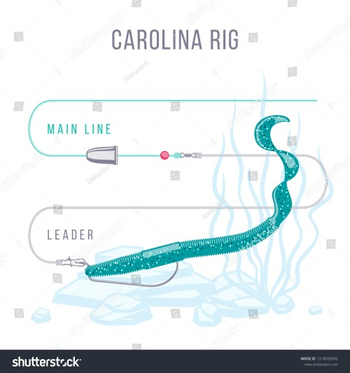 small resolution of carolina rig fishing tackle setup scheme for catching bass pike perch zander and