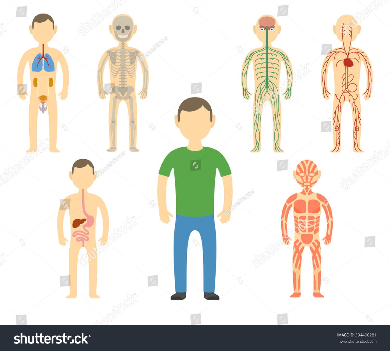Cartoon Man Body Anatomy All Body Systems