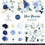 Classic Blue White Rose White Hydrangea Stock Vector Royalty Free 1594427284