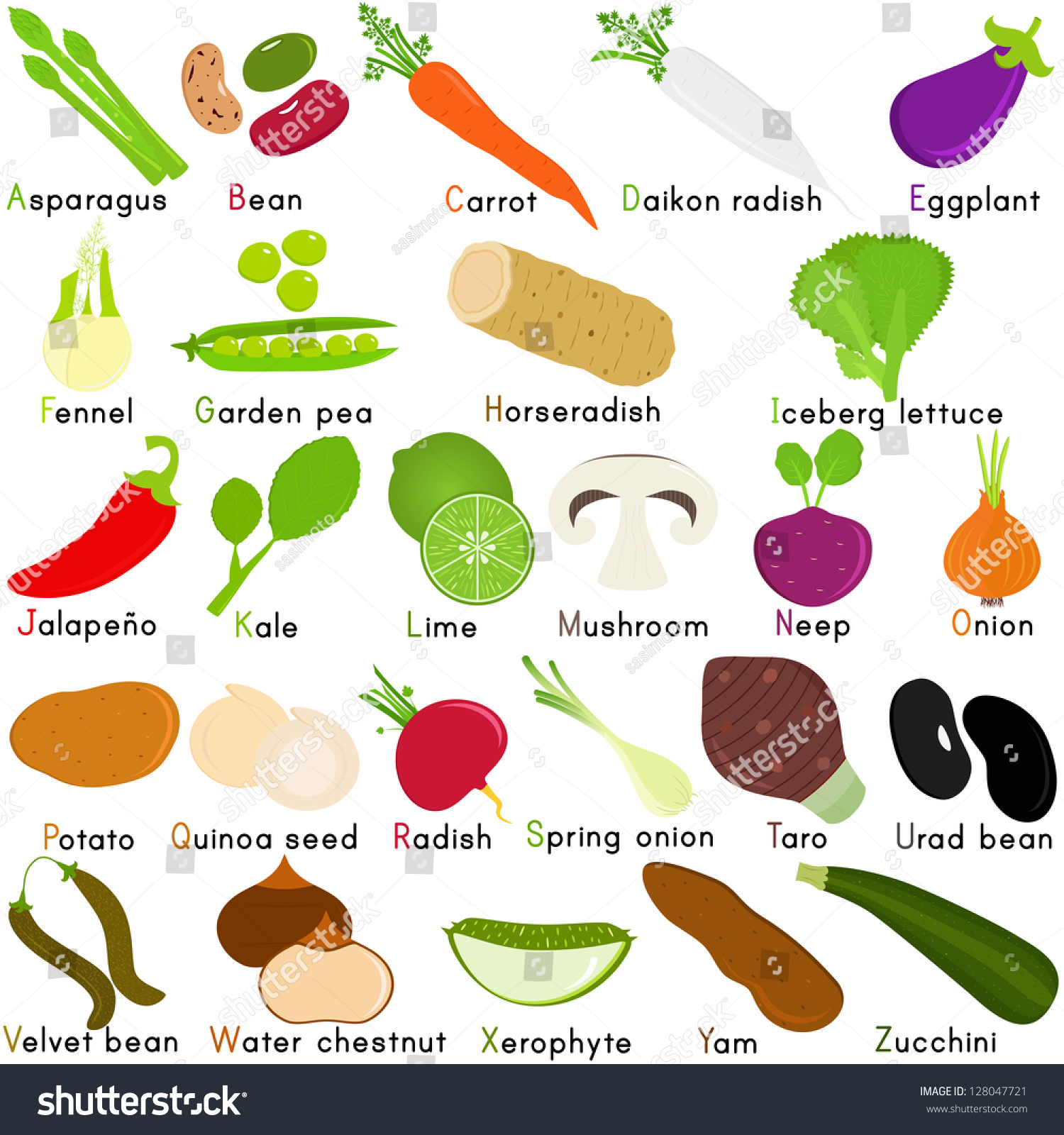 Colorful And Cute Vector Icons Collection A Set Of Vegetable Representing Alphabet A To Z