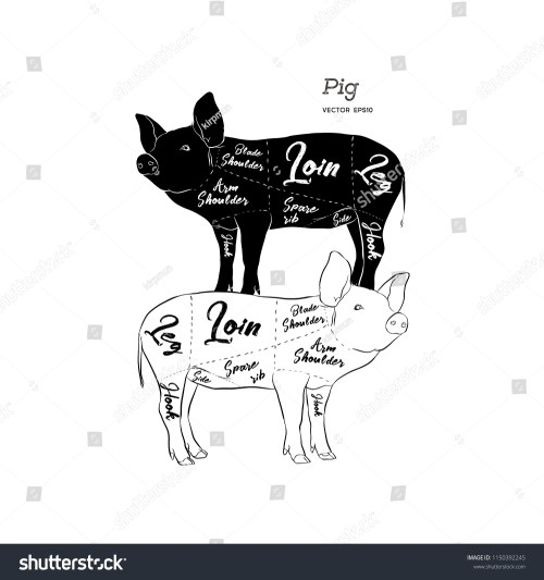 small resolution of cut of meat set poster butcher diagram scheme and guide pork vintage