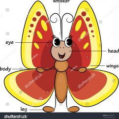Parts Of A Butterfly Diagram Molecular Orbital Energy Level For No Cute Cartoon Vocabulary Body Vector