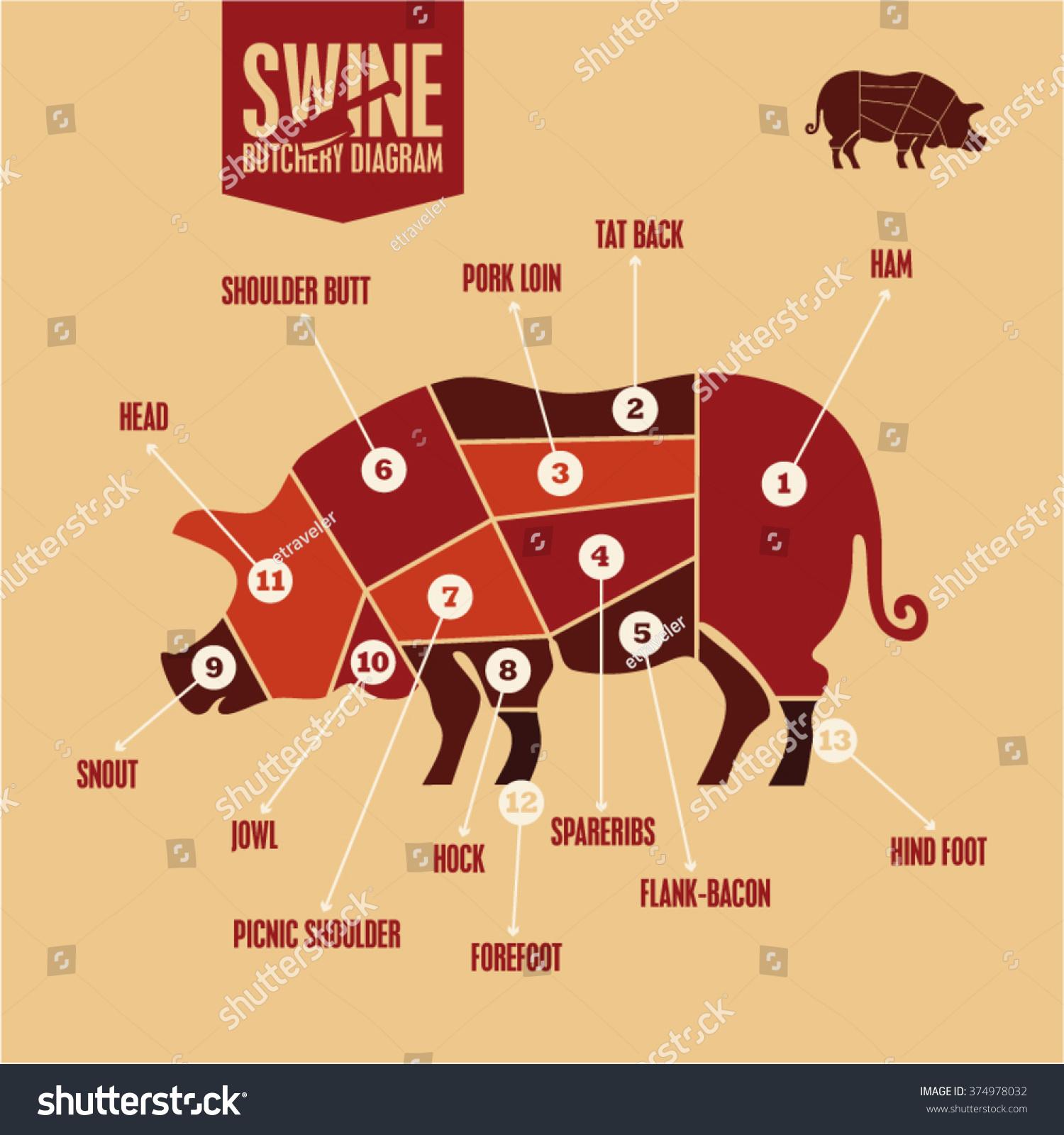 pork butcher cuts diagram john deere lt155 wiring color swine butchery stock vector