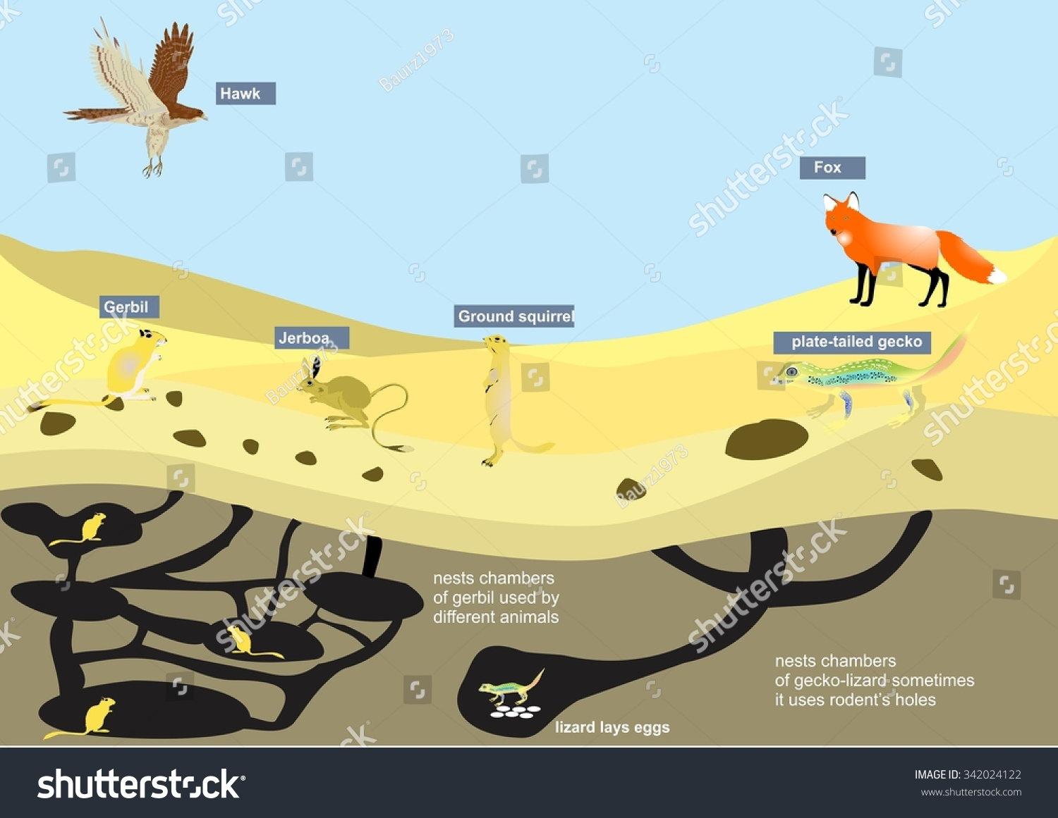 desert hawk diagram 12 lead 480v motor wiring ecosystem illustration some infographic elements stock vector with fox rodents lizard