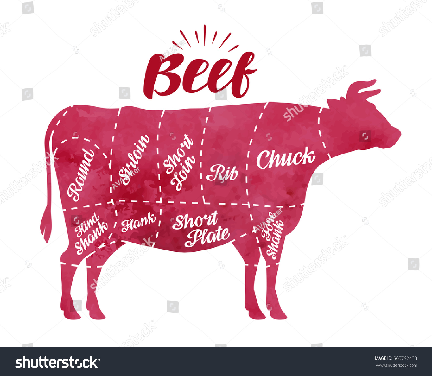 cow meat diagram electrical wiring diagrams for outlets cutting butcher shop stock vector