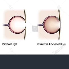 Simple Human Eye Diagram Reading A Relay Wiring Diagram: Evolution Of The Eye. Stock Vector Illustration 122616334 : Shutterstock