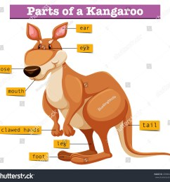 diagram showing different parts of kangaroo illustration [ 1500 x 1434 Pixel ]