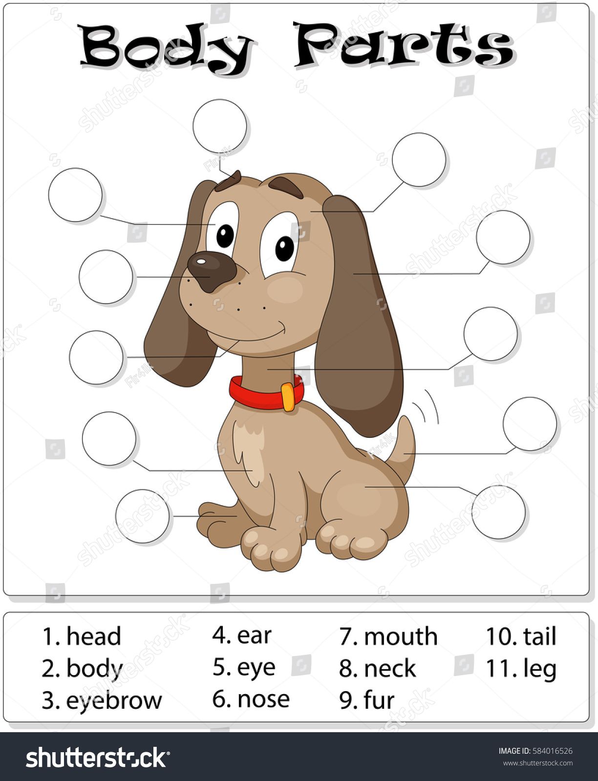 Dog Body Parts Animal Anatomy English Stock Vector