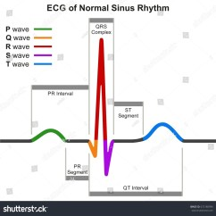 Labeled Ekg Diagram New York City Subway Systole And Diastole Of The Heart