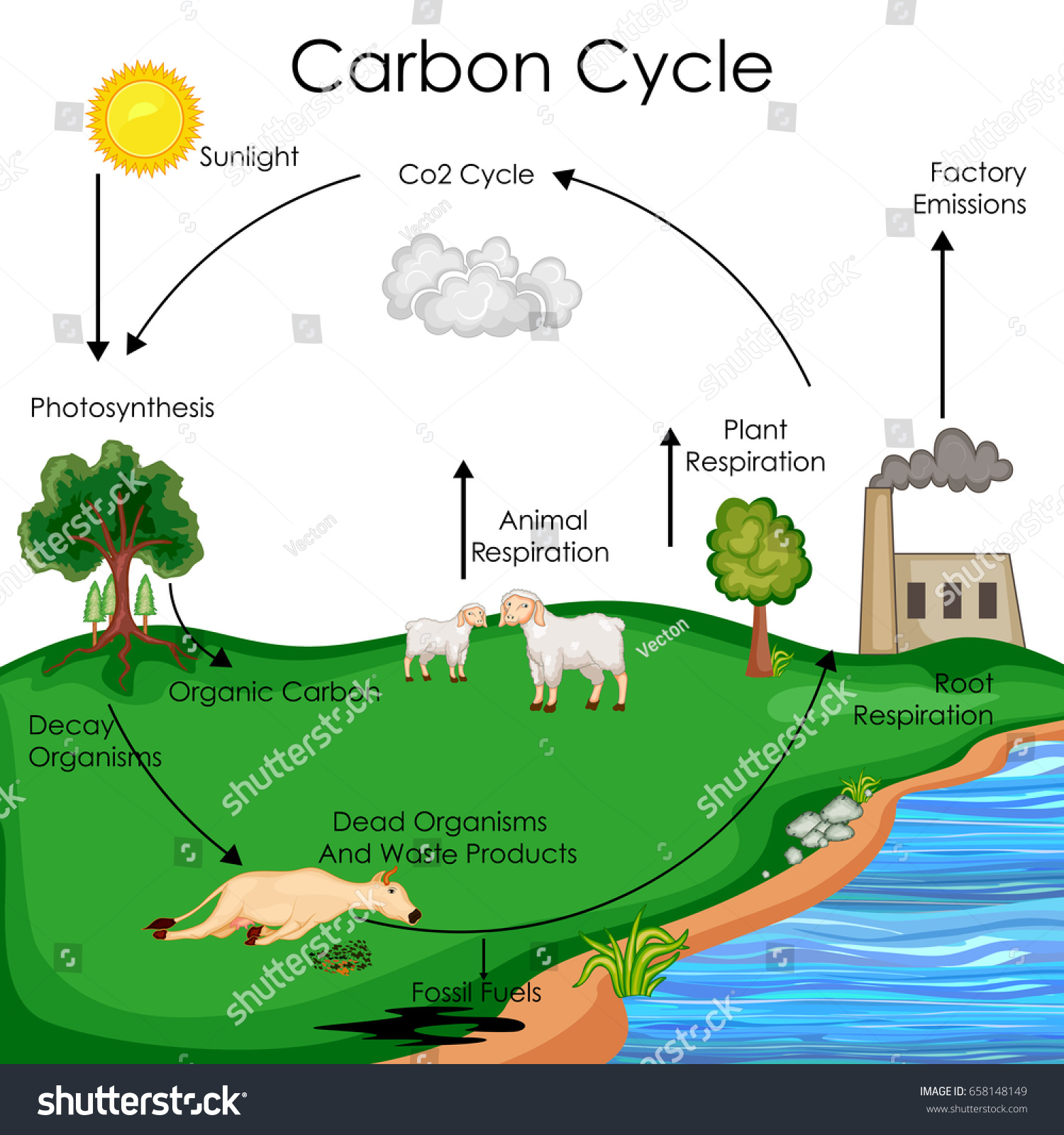 Carbon Cycle Diagram For Kids