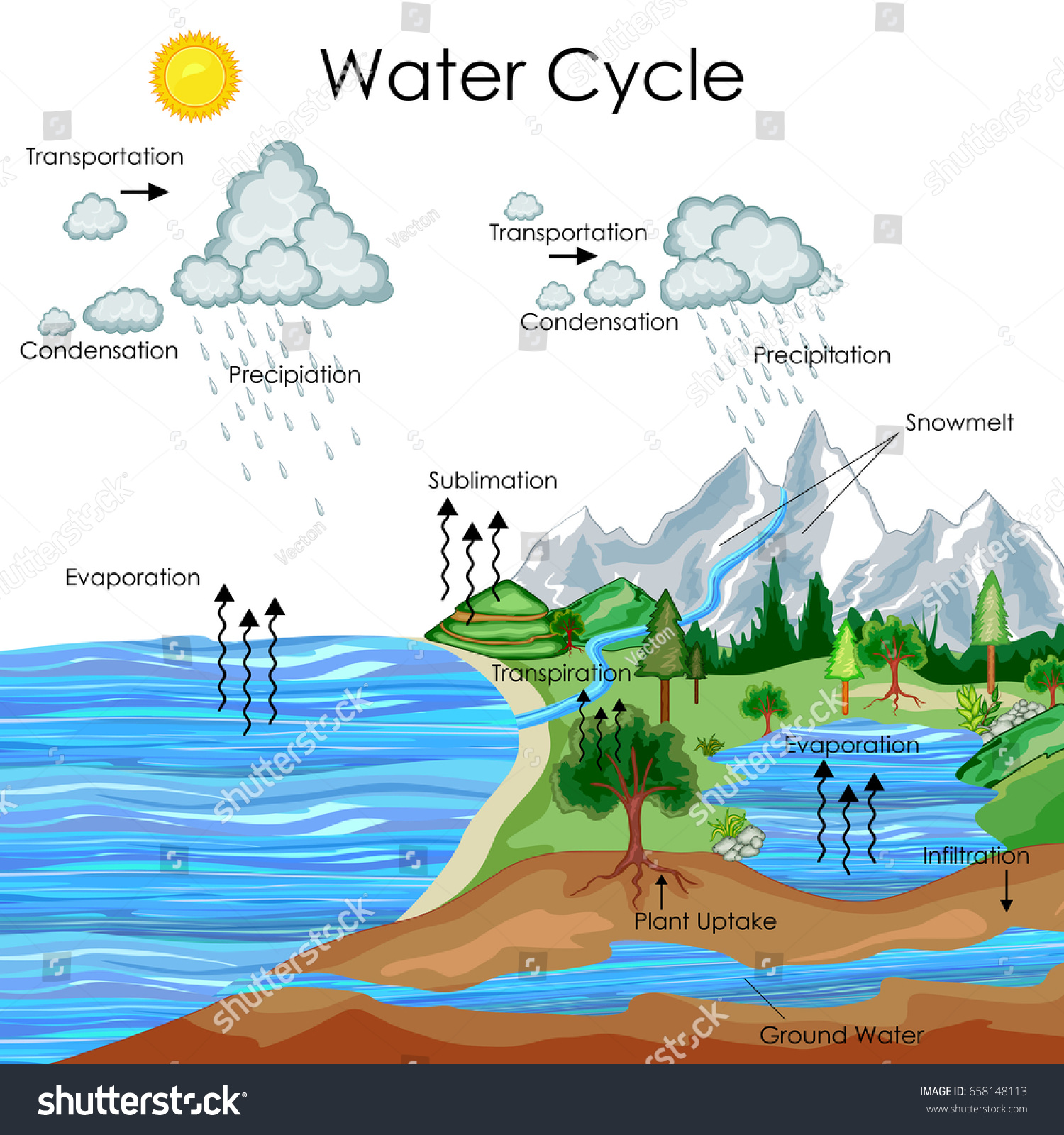 Education Chart Biology Water Cycle Diagram Stock Vector