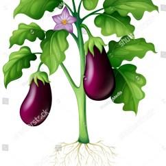 Plant Diagram Clip Art Cb Mic Wiring Manual Eggplant
