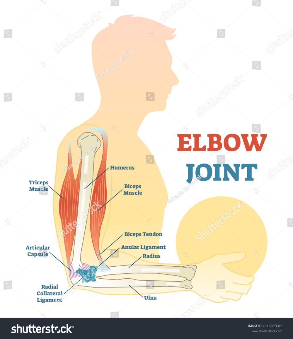 medium resolution of elbow joint vector illustrated diagram medical scheme educational sports injury information
