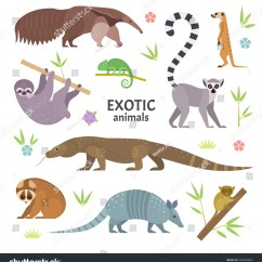 African Elephant Food Chain Diagram S13 Sr20det Redtop Wiring Exotic Animals Vector Illustration Flat Stock