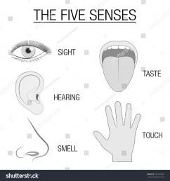 eye ear tongue nose and hand five senses chart with sensory organs  [ 1500 x 1600 Pixel ]