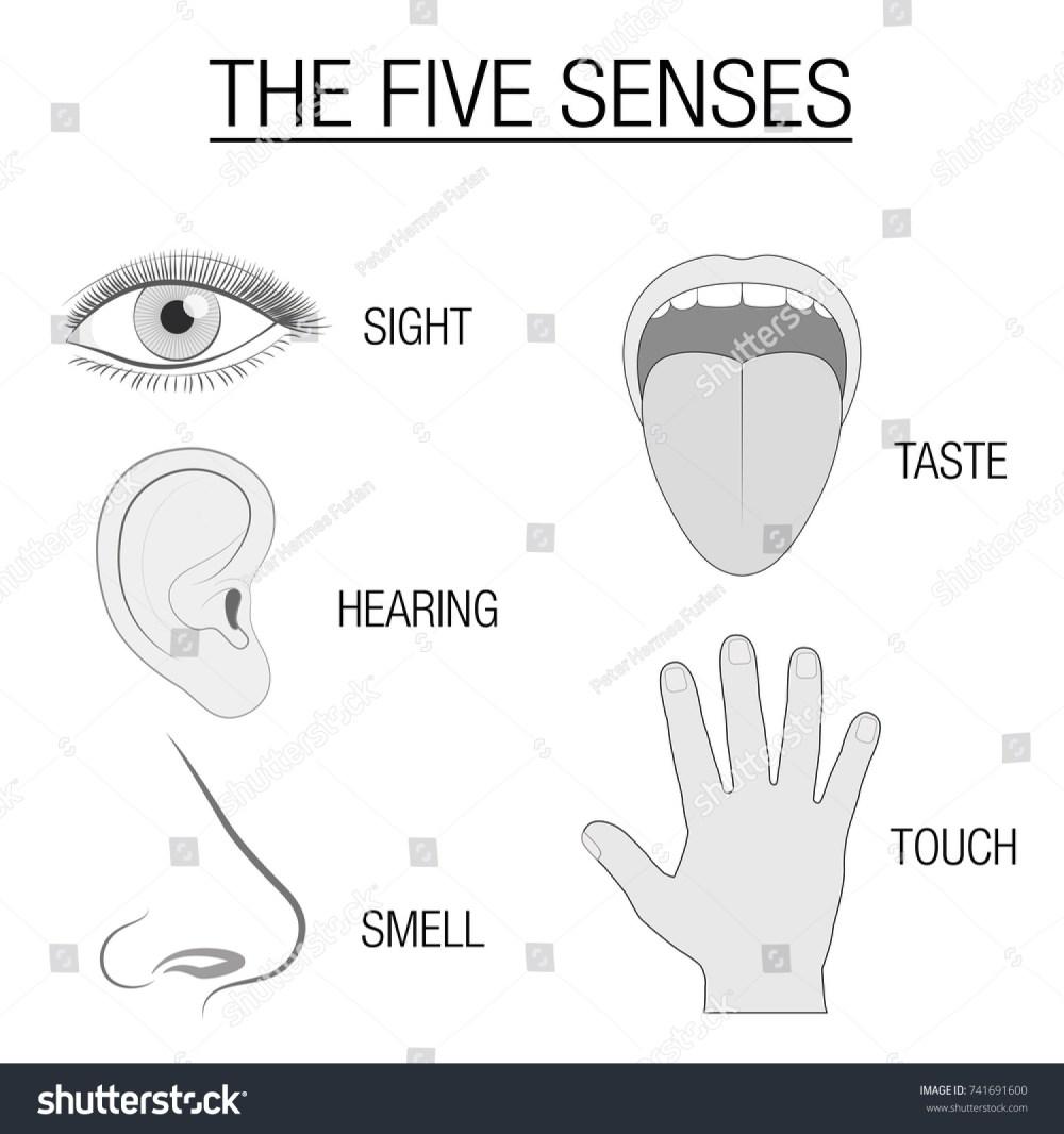 medium resolution of eye ear tongue nose and hand five senses chart with sensory organs