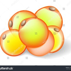 White Fat Cell Diagram Pir Light Switch Wiring Cells Adipose Tissue Adipocytes 스톡 벡터 189029309