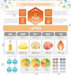 fat lipids diet infographic diagram poster water protein lipid carbohydrate mineral vitamin flat icon set  [ 1062 x 1600 Pixel ]