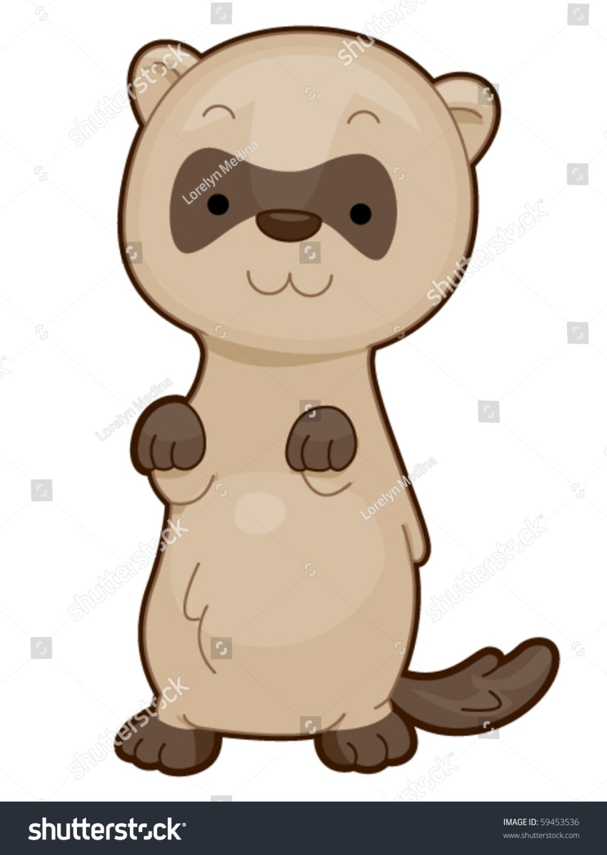 medium resolution of ferret vector