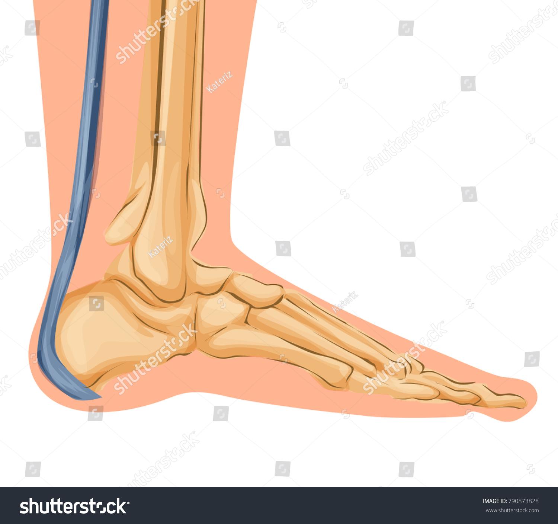 hight resolution of foot bones illustration cartoon art of foot bones vector medical theme