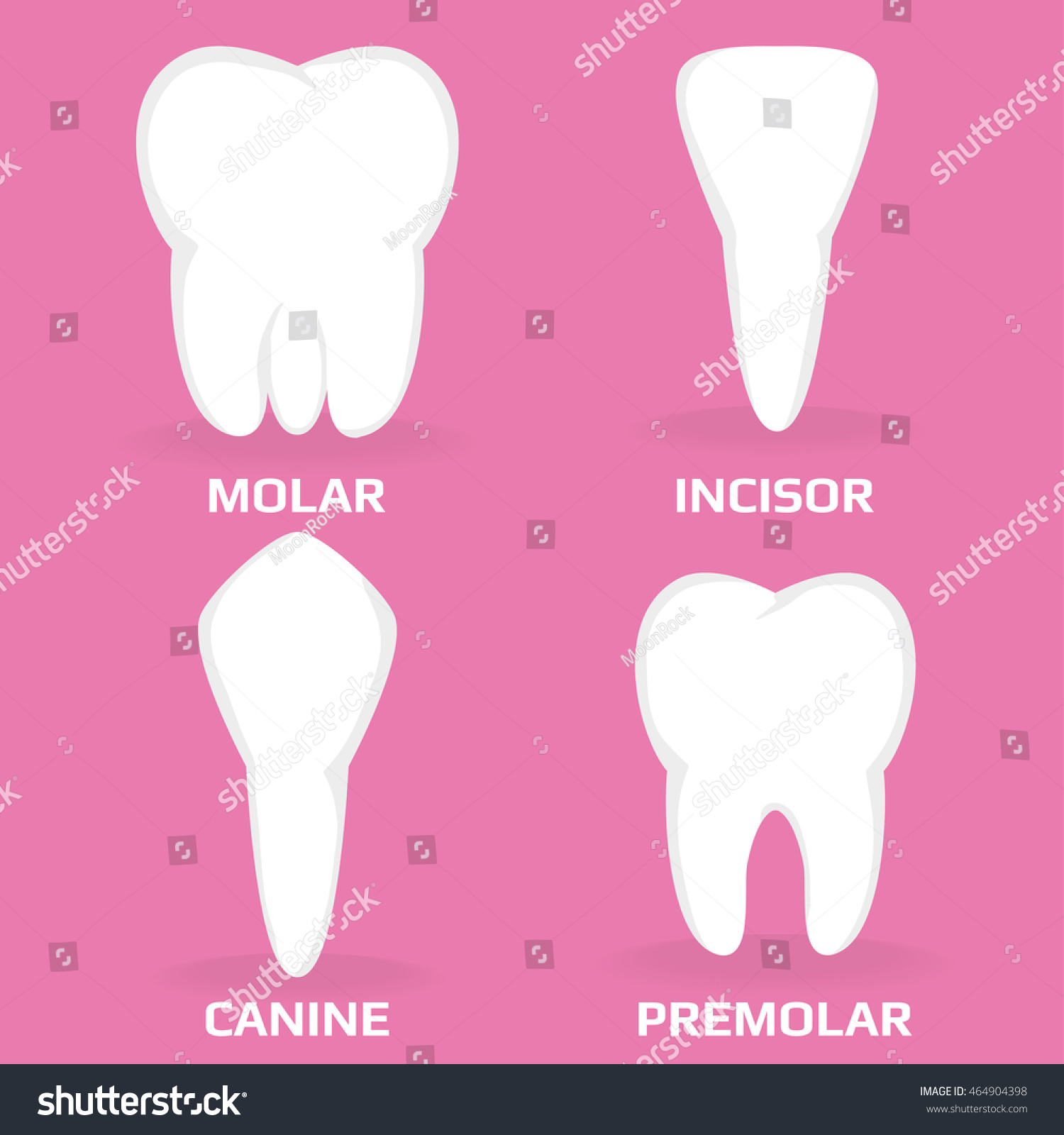 Four Different Types Teeth Vector Illustration Stock