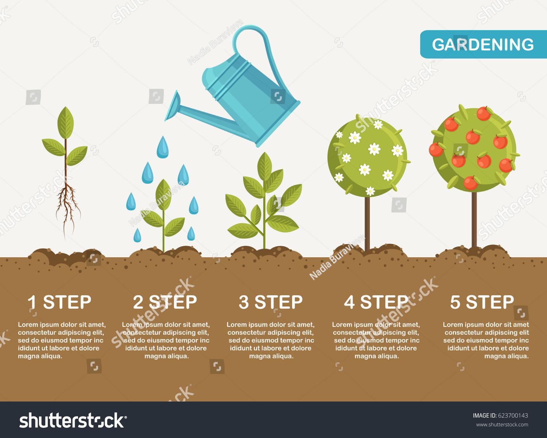 Gardening Planting Process Concept How Grow Stock Vector