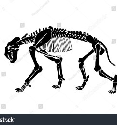 graphical skeleton of saber toothed tiger on white background vector illustration anthropology [ 1500 x 1140 Pixel ]
