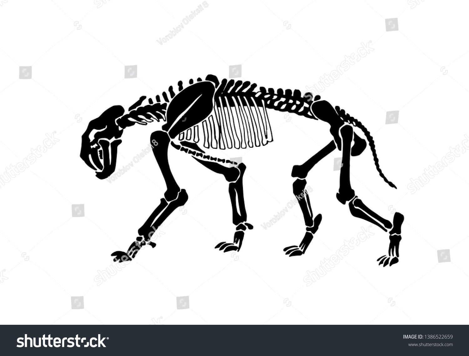 hight resolution of graphical skeleton of saber toothed tiger on white background vector illustration anthropology