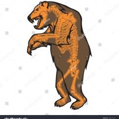 Bear Skull Diagram 2004 Chrysler Sebring Power Window Wiring Grizzly Skeleton Stock Vector 109411379 Shutterstock