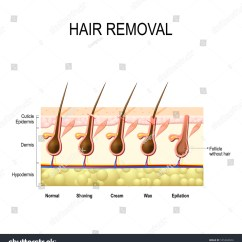 Barber Shave Diagram York Heat Pump Control Wiring Pubic Hair Stock Photos Images Pictures Shutterstock