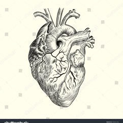 Interior Heart Diagram Compound Microscope Outline Symbol