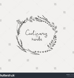 hand drawn set of culinary herb basil and mint rosemary and sage thyme  [ 1500 x 1443 Pixel ]