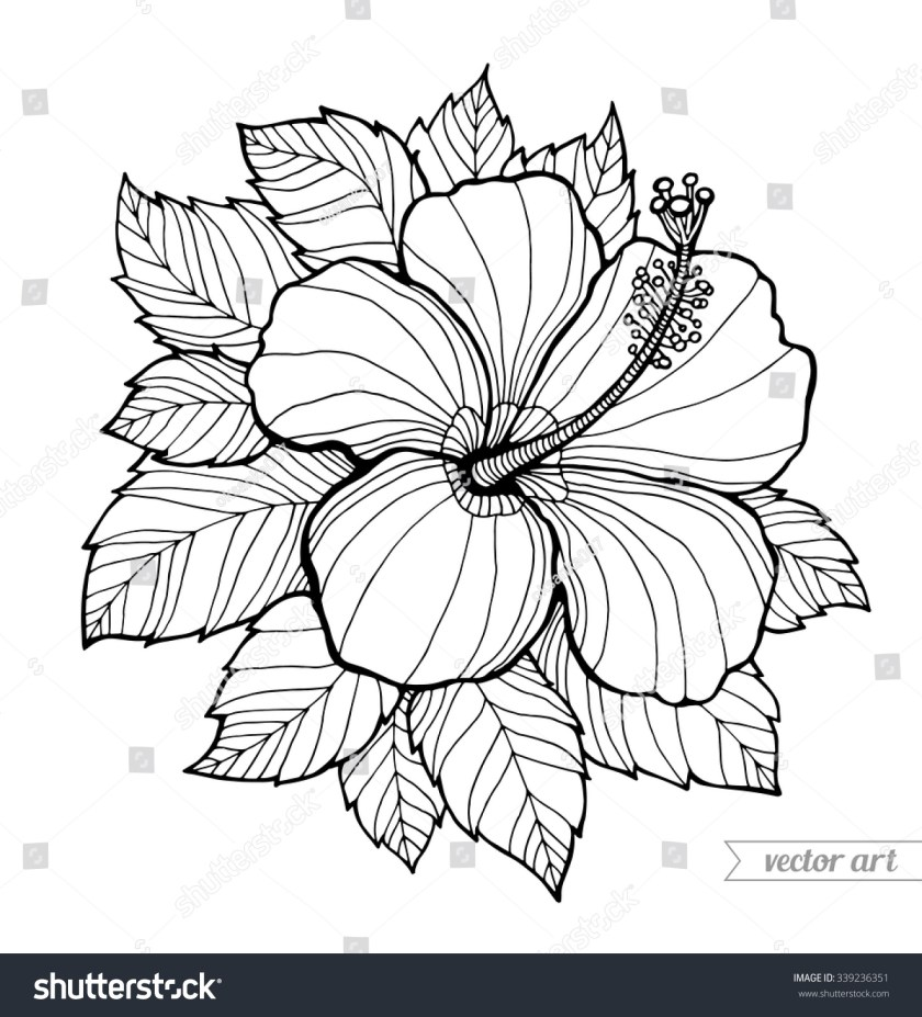 hawaii hibiscus flower leaf aloha hawaii stock vector