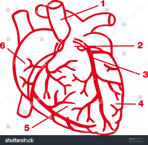 small resolution of heart diagram