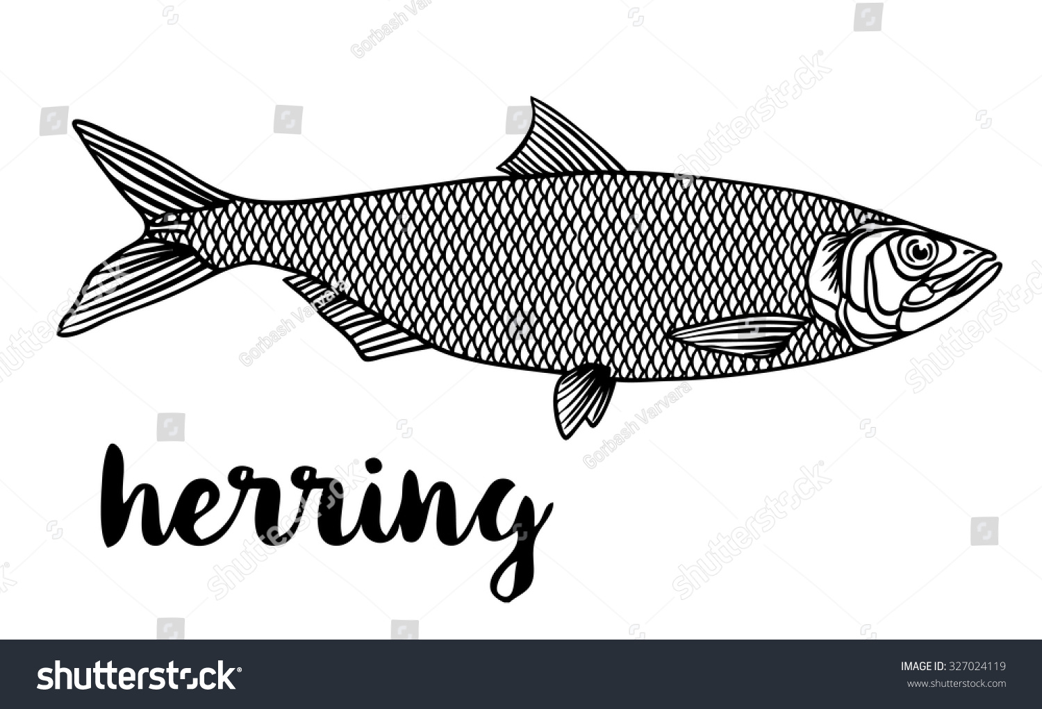 Herring Vector Illustration Fish On On Stock Vector 327024119