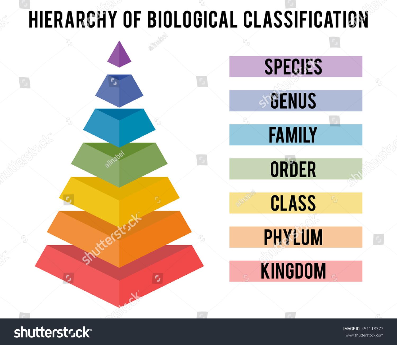 Hierarchy Biological Classification Major Taxonomic Ranks