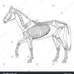 Horse Skull Diagram Autocad Wiring Tutorial Skeleton Stock Vector 300039833 Shutterstock