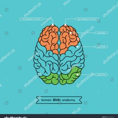 Human Brain Diagram Cerebrum Christianity Judaism Islam Venn Anatomy Structure Stock Vector