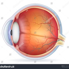 Eye Anatomy Vintage Diagram Switch Outlet Combo Wiring Human Medical Illustration Stock